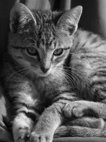 Black and White Kitten by FullofSecrets