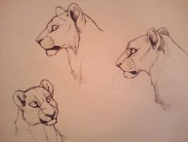 Lion Facial Studies 2011 by Dilydu