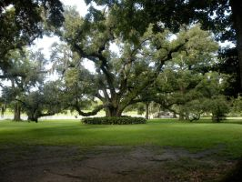 New Orleans City Park 15 by nevertakemystock