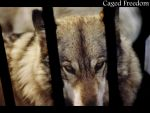 Caged Freedom 1 by dirtycar74