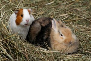 Rabbit and Guinea Pig 3 by gaothaire