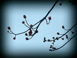 Tree Buds  - 2 by surrealistic-gloom