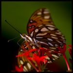 Nectar Effect by justfrog