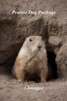 prarie dog package by bookscorpion