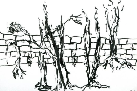 Trees, wall. by DuckTeeth
