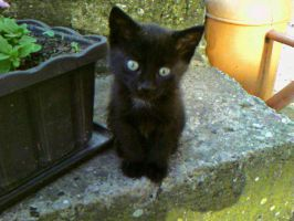 little_black_cat by celluloidfairy