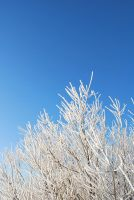 White Winter by vanmall