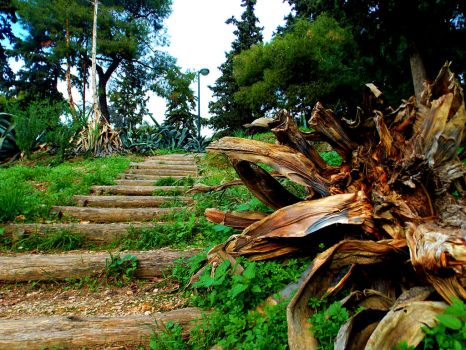 Hill Path by StefMyk