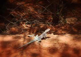 Lizard on watch by nsrosenqvist
