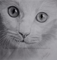 White Cat by WitchiArt