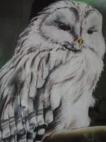 Owl by Andy-Mii