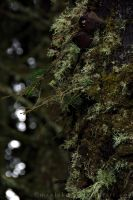 Forest Moss by maxlake2