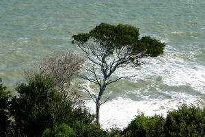 Tree and sea by UdoChristmann