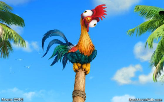 18 top rooster wallpaper - photo #33