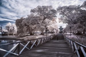Victoria Park, University of Sydney - Infrared by SteveCampbell