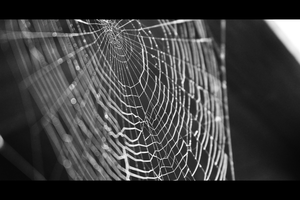 Cobweb by HugoOfficial