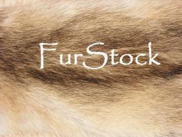 Welcome to Group FurStock by Majiran