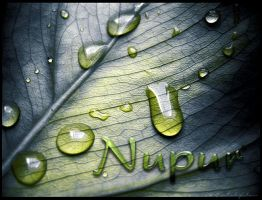Writing on a leaf by chivisor