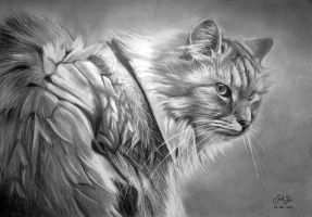 Cat drawing by JackXYZ
