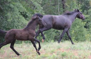 Mare and Foal 3 by MountainViewStock