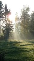 Enlighted Meadow 8 by SelvaStock