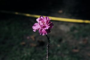 Lonely stem flower by Noora7at