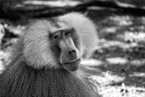 BABOON by NikaLim