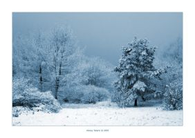 Blue Winter I by Frider