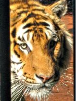 .::Sibirian Tiger 2::. by WhiteSpiritWolf