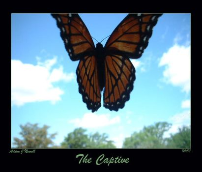 The Captive by ADmeister7