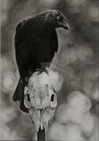 The Crow by vitorassis88
