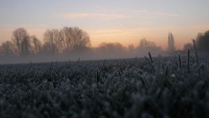 Frozen field by grotgier