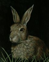 Brown Rabbit by nudge1