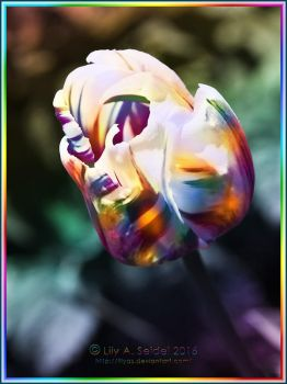 Rainbow Tulip by Lilyas