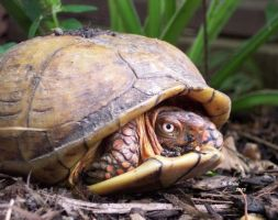 turtle2 : stalemate by crawlintothesun