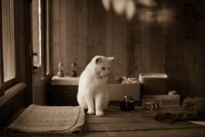 Vintage Cat by Draiocht-651