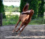 River - Stock 8 by Horses--Stock