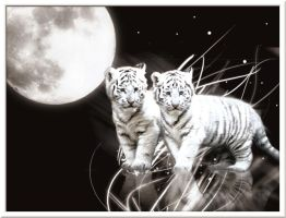 Tiger Cubs by EastonProductions