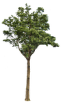 Tree 2 PNG.. by WelshDragonStockNArt