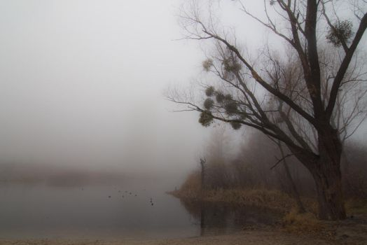 Misty Lake by specimen26