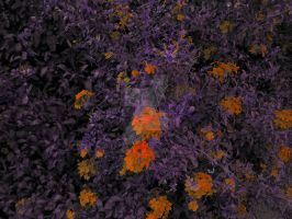 Inverted Flowers 2 by Industrial-Pop