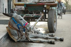 Resting Donkey 1972887 by StockProject1