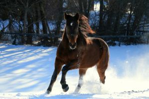 Competitive Edge Snow I by MiniLover08