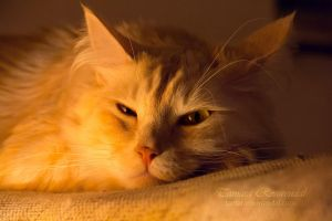Go away... I'm sleeping by TammyPhotography