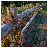 Frosted Fence by leavenotrase
