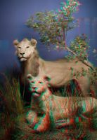 Stereoscopic Indian Lions by dvreflex