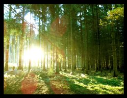 Forest freshness by What-is-worth