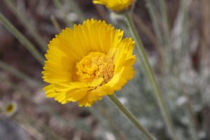 Yellow Wildflower 2 by Bex013
