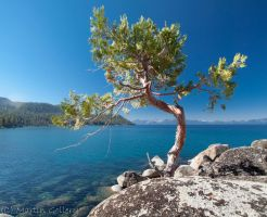 Wee Tree by MartinGollery