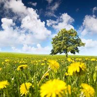 Tree in a field by ASQ